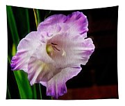 Gladiolus - Summer Beauty Tapestry
