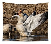 Glorious Snow Goose Tapestry
