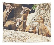 Goats On A Rock Tapestry