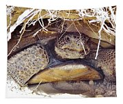 Gopher Tortoise Tapestry