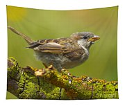 Gorrion House Sparrow Tapestry
