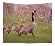 Goslings On A Walk Tapestry
