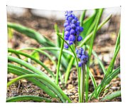 Grape Hyacinth Tapestry