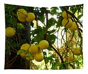 Grapefruits Tapestry