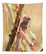 Grasshopper In The Marsh Tapestry