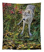 Gray Wolf Drinking Tapestry