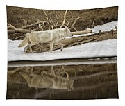 Gray Wolf Reflection Tapestry