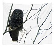 Great Grey Owl On The Lookout Tapestry