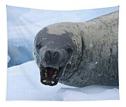Greetings From Antarctica.. Tapestry