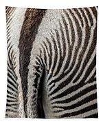 Grevy's Zebra 5 Tapestry