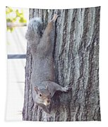 Grey Squirrel 1 Tapestry