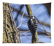 Hairy Woodpecker - Female Tapestry