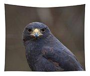 Harris Hawk Tapestry