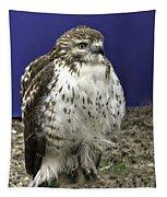Hawk 3 Tapestry