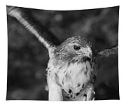 Hawk Attack Black And White Tapestry