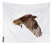 Hawk In Flight Tapestry
