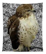Hawk V3c Tapestry