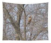 Hawkish Tapestry