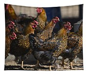 Hens Of Distinction Tapestry