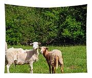 Here Is Looking At Ewe Tapestry