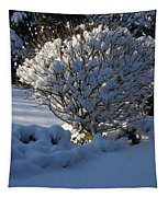 Hibiskus In The Wintertime Tapestry