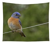 High Wire Tapestry