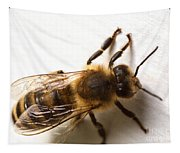 Honey Bee  Tapestry