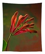 Honeysuckle Blooms Unopened 1 Tapestry