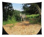 Horse Walks Toward Camera Tapestry