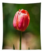 Hot Pink Tulip Tapestry