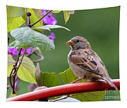 House Sparrow On A Wheel Tapestry