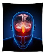 Human Brain Tapestry
