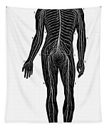 Human Nervous System Tapestry