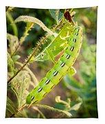 Hummingbird Moth Caterpillar Tapestry