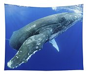Humpback Whale Near Surface Tapestry