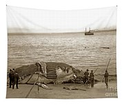 Humpback Whale On A Monterey Beach California  Circa 1896. Tapestry