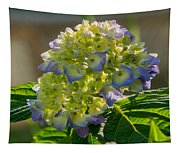 Hydrangeas First Blush Tapestry