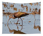 Ibis Feeding On Winter Wetlands Tapestry
