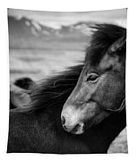 Icelandic Horses Tapestry by Dave Bowman