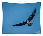 Immature Bald Eagle In Flight Tapestry