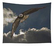 Immature Bald Eagle Tapestry