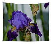 Impossible Imagined Iris Tapestry