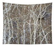In The Sycamores Tapestry