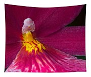 Into The Orchid Tapestry