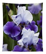 Iris Purple And White Fine Art Floral Photography Print As A Gift Tapestry