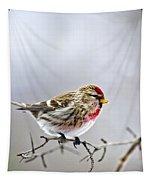 Irruptive Bird Common Redpoll Tapestry