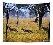Jackals On Savanna. Safari In Serengeti. Tanzania. Africa Tapestry