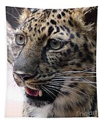 Jaguar-09499 Tapestry