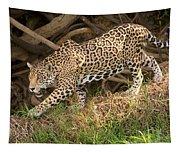 Jaguar Panthera Onca Foraging Tapestry