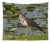 Javan Pond Heron With A Fish Dthn0069 Tapestry